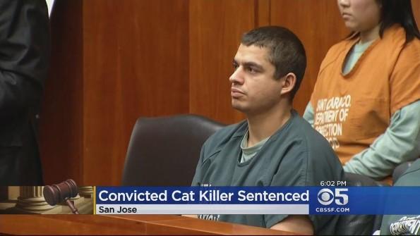 Asesino de gatos es sentenciado ¡con 16 años de cárcel!