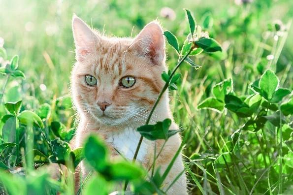 Hoy es el Día del Gato ¿sabes por qué?