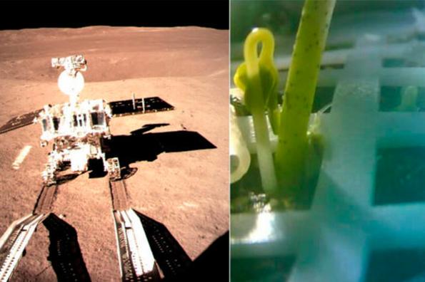 Logran sembrar por primera vez plantas en la luna (+FOTO)