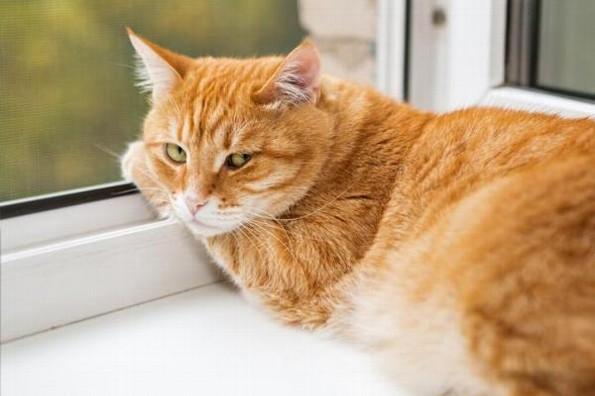 ¡Va el primero! Hoy es el día internacional del gato