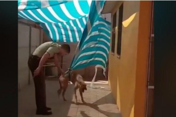 Policía salva a un perrito y este se lo agradece con un tierno abrazo  #VIDEO