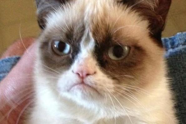 Muere Grumpy Cat el gato más famoso de internet