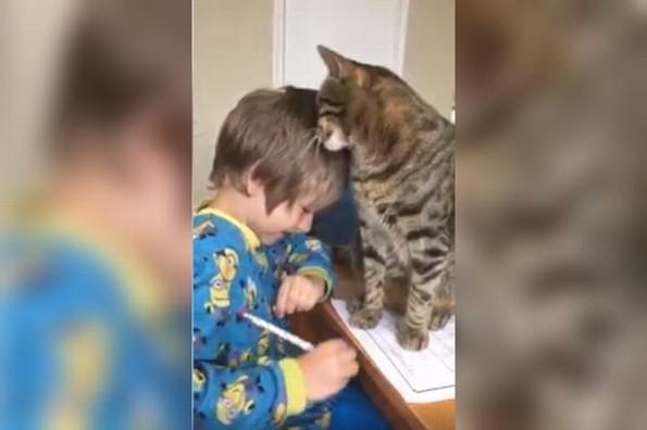 Tierno gato interrumpe la tarea de su dueño para pedir amor #VIDEO