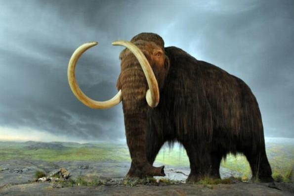 Hallan fósil de Mamut de hace 13 mil años en Jalisco