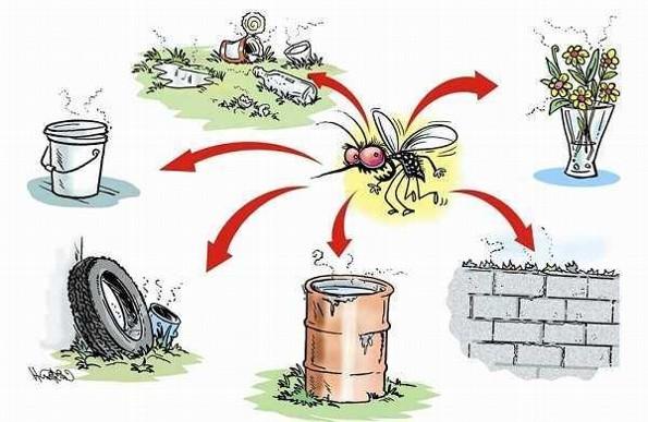 Checa estas recomendaciones para prevenir el dengue