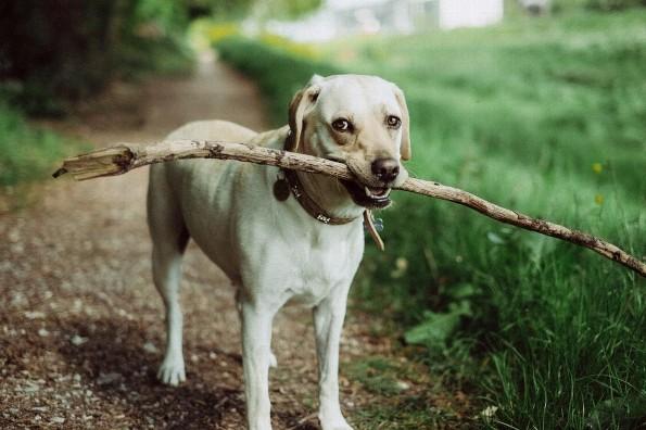 Protege a tu perro, aprende a eliminar garrapatas