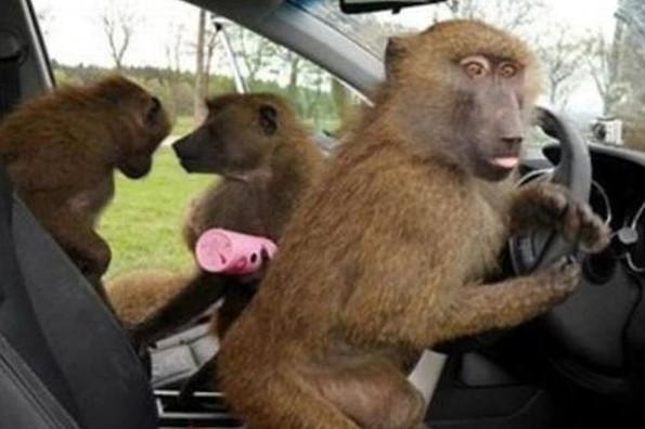 Monos armados causan pánico en safari de Inglaterra (+video)