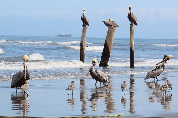 Hoy jueves habrá mucho calor en Veracruz/Boca del Río