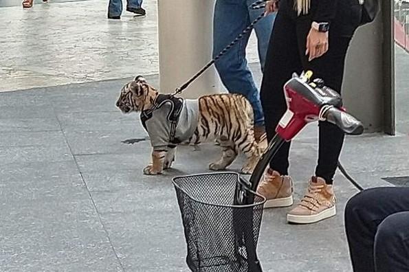 Mujer pasea en plaza comercial con un cachorro de tigre