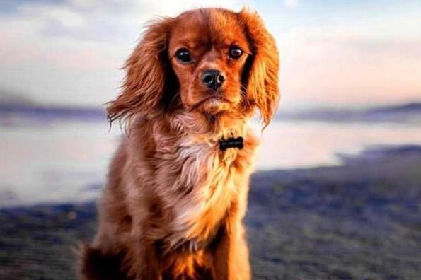 Estudio revela que los perros pueden detectar la maldad de la gente