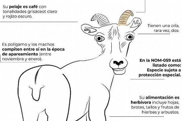 Infografías de Profepa sobre animales desatan burlas (+fotos)