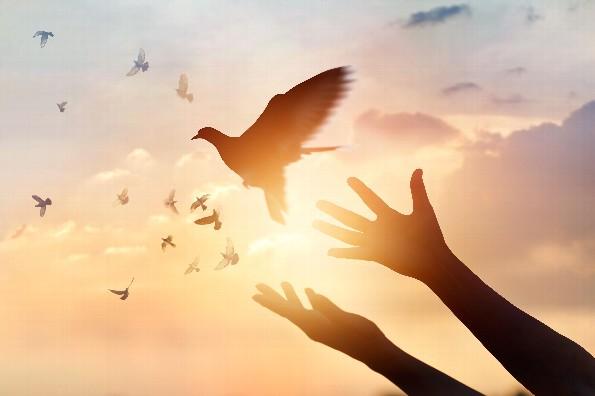 21 de septiembre | Día Internacional de la Paz